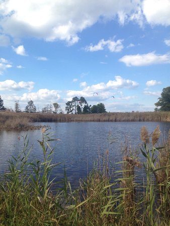 Terrapin Nature Park: Marsh area