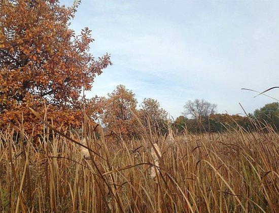 Blackwell Forest Preseve: McKee Marsh
