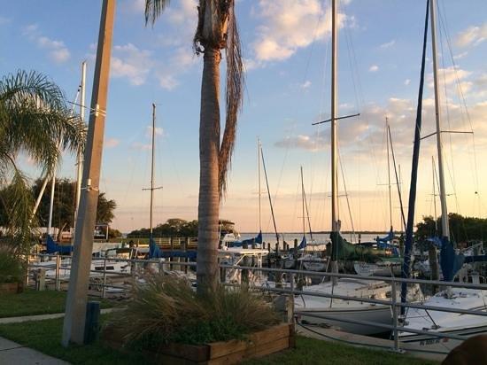 Safety Harbor Marina Park and Fishing Pier: Pretty marina