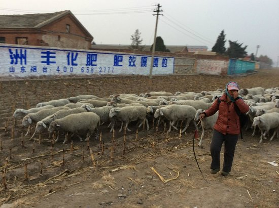 Heishan County, Китай: Scenes along the way - sheep