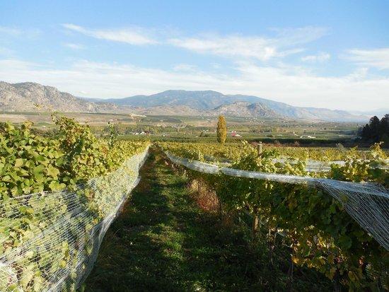 Rustico Farm & Cellars: Looking east through the vineyard