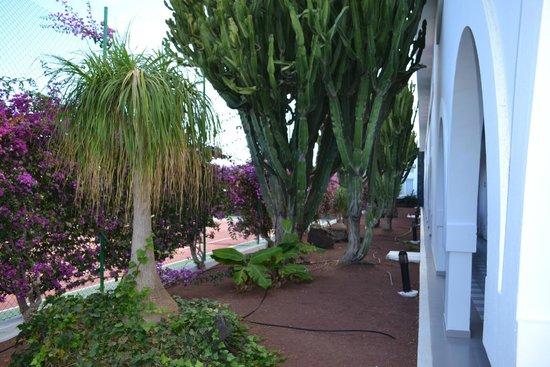 Apartamentos Riu Olivina Coral : parc
