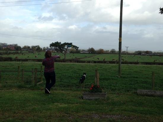 Blackford, UK : playing fetch