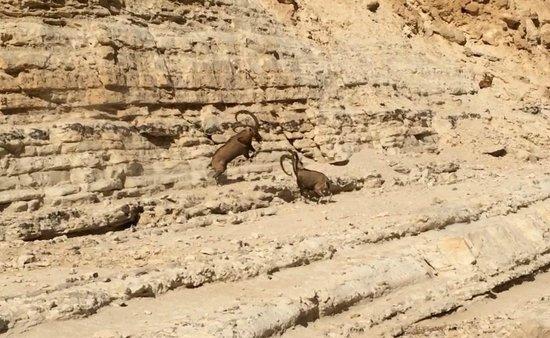 Avdat National Park: Men at work