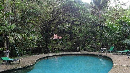 Esquinas Rainforest Lodge: Pool