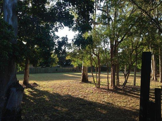 Big4 Point Vernon Holiday Park: View from en suite cabin No.9 door
