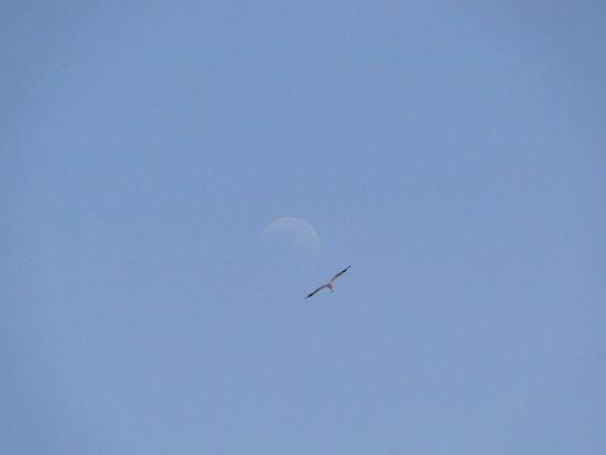 Mas Le Sauvageon: vol au dessus du Mas du Sauvageon