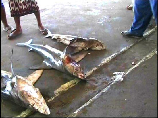 Al Hudaydah, Jemen: Squali in vendita