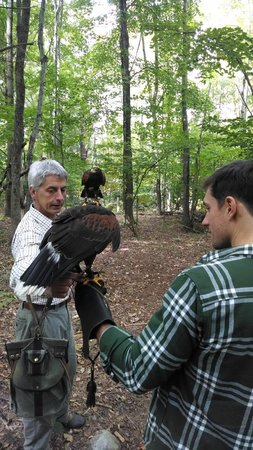 Green Mountain Falconry School: Hawk Walk