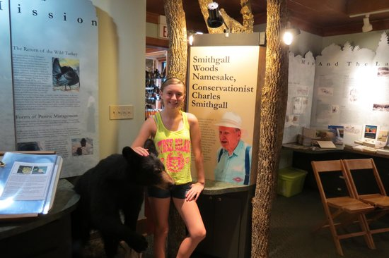 Smithgall Woods Conservation Area: Wildlife exhibits in the gift shop