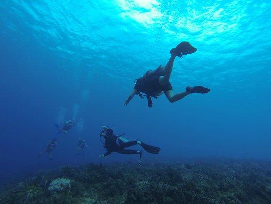 Marko's The Parrotfish Dive Center: 1