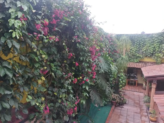 Your Host Inn Cuernavaca : Patio