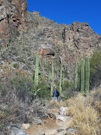 Desert Trails Bed and Breakfast : Lot's of great hikes in Tucson.