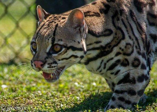 Panther Ridge Conservation Center: Toltec