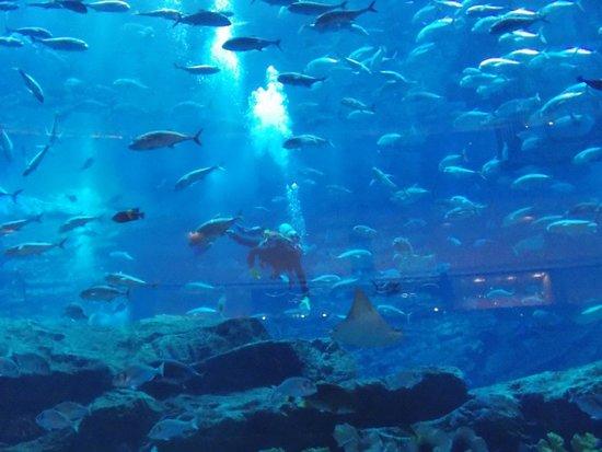Aquarium Dubai Mall - Picture of Dubai Aquarium & Underwater Zoo ...