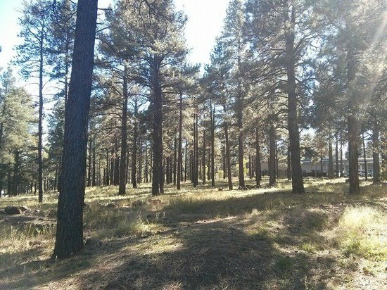 DoubleTree by Hilton Hotel Flagstaff : Pine tree area behind the hotel - perfect for your dog