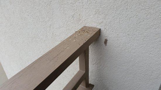 Econo Lodge Inn & Suites: balcony #2