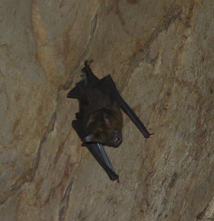 Khao Mai Kaew Cave: Bats