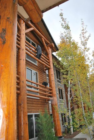 The Lodge at Jackson Hole: Peeping browns