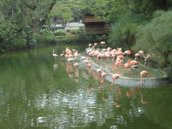 Zoologico de Cali: Flamingos Zoológico de Cali