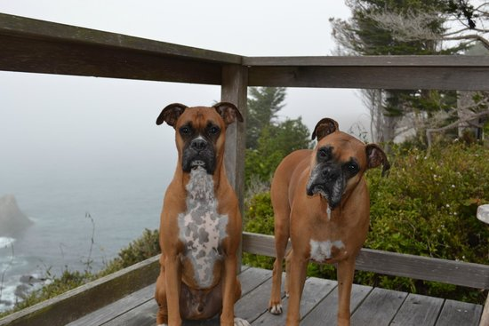 Inn at Schoolhouse Creek: pups on vacation
