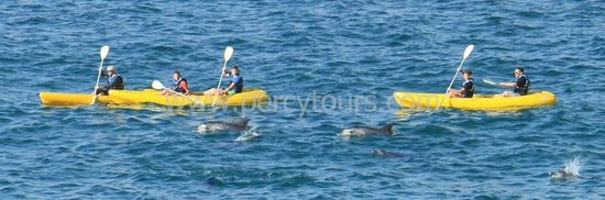Percy Tours Day Tours: Kayaking with Dolphins, Hermanus