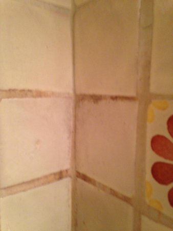 Pueblo Bonito Bed and Breakfast Inn: Mold on shower tile