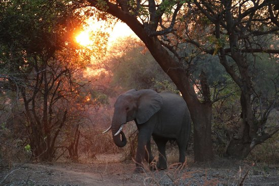 Flatdogs Camp: Elephants entering Flatdogs at Sunrise