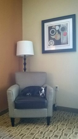 La Quinta Inn & Suites Searcy : Even old Lucy found a place to curl up and recharge her batteries