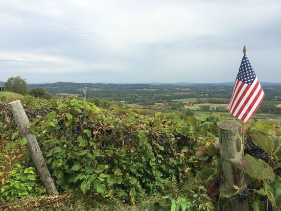 Bluemont Vineyard: View from the Vineyard