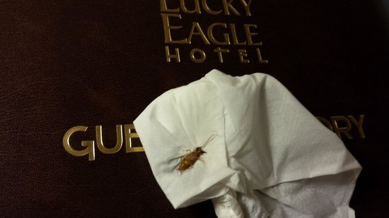 Eagle Pass, TX: Killed this in my room sums up the hotel at kickapoo.