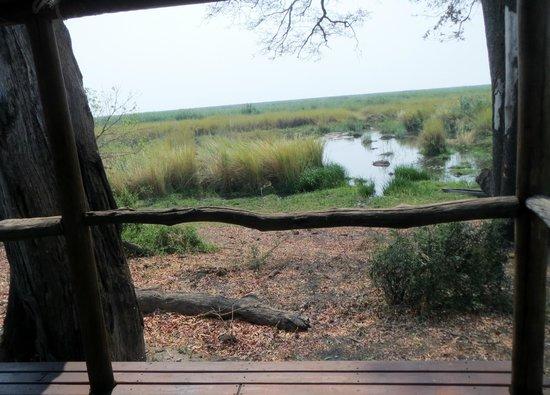 Linyanti Bush Camp- African Bush Camps: hippo territory