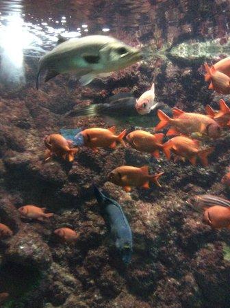 Kushimoto Marine Park Aquarium: Colourful fishes