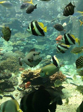 Kushimoto Marine Park Aquarium: More fishes