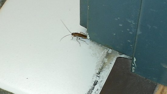 Mt. Olympus Resort: Ralph the Roach