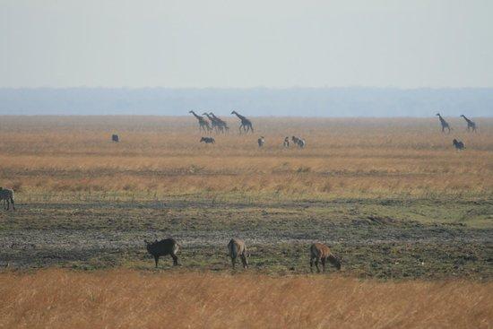 Katavi Wildlife Camp: Animals passing