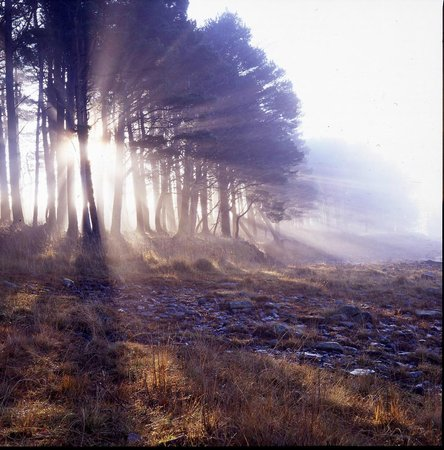 The Travellers Rest: magical local sunrise