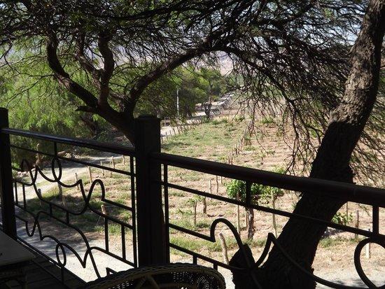 La Casa de la Bodega -Wine Boutique Hotel: Desde el balcón hacia lo viñedos