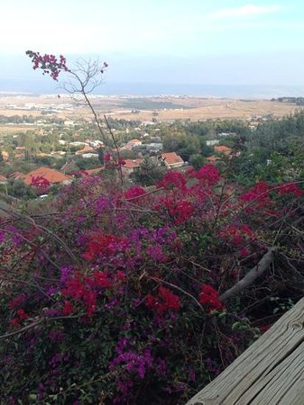 Hameiri Estate: view from the top