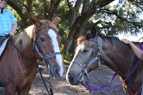 Cactus Jack's Trail Rides: Big John & Annie Together