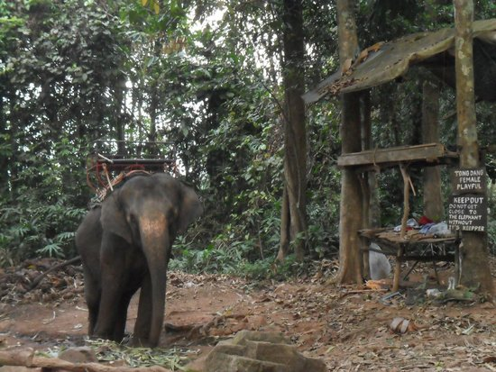Ban Chang Thai - Elephant Camp: camp des éléphants