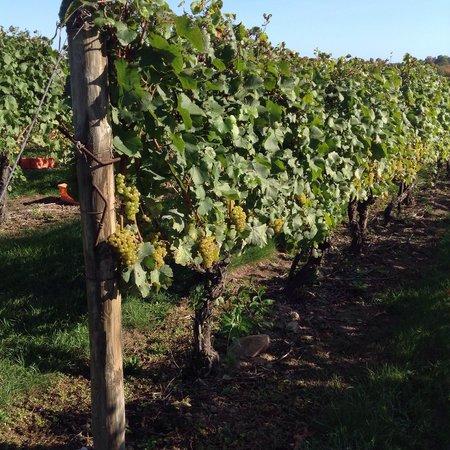 Stonington Vineyards: Cabernet
