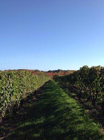 Stonington Vineyards: Breathing and tasty too