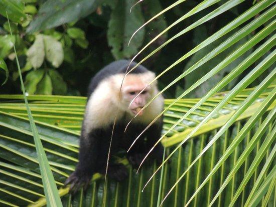 Villa Kristina Apartments: Capuchins