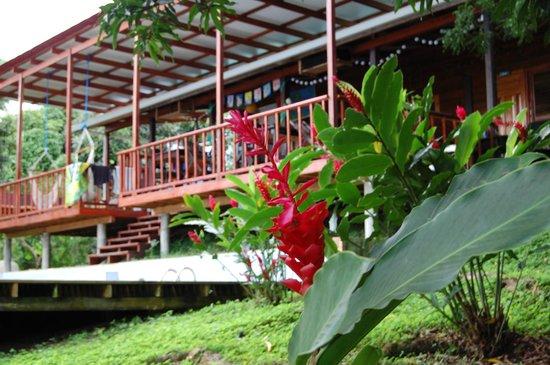 Bambuda Lodge : Garden Surroundings