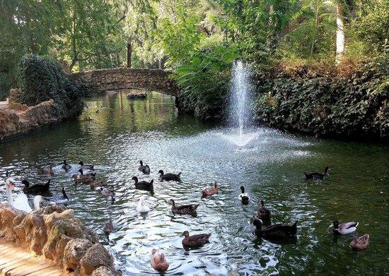 Estanque e isleta de los patos picture of parque de for Estanque para patos jardin