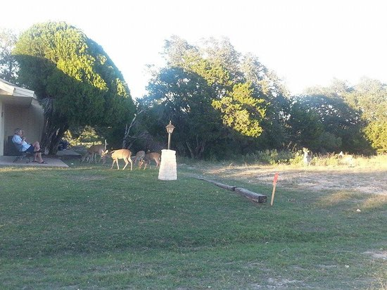 The Shores at Lake Travis: deer on property