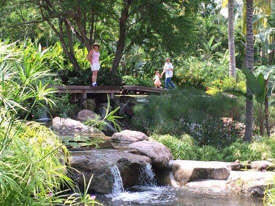 Jardines tropicales picture of jardines de mexico for Jardines pequenos mexicanos