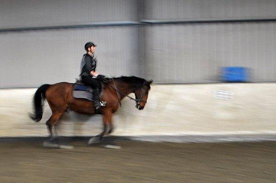 Annaharvey Farm Equestrian Centre : Flatwork