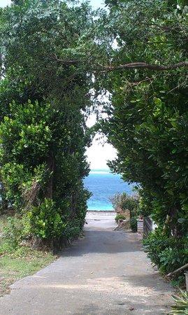 Bise Fukugi Tree Road : вид на море сквозь аллею